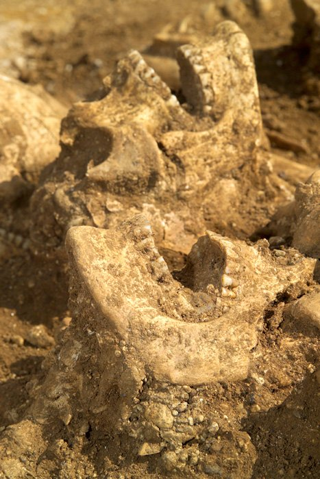 Saxon skeletons of young men unearthed in Oxford
